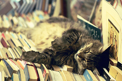 Cat sleeping on books